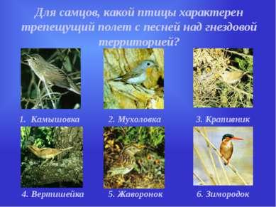 Для самцов, какой птицы характерен трепещущий полет с песней над гнездовой те...