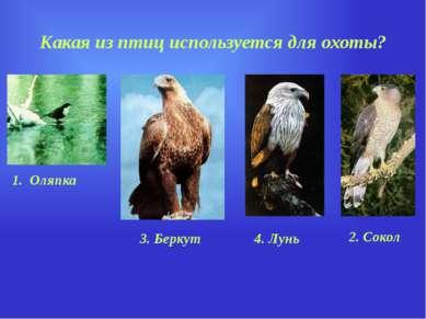 Какая из птиц используется для охоты? 1. Оляпка 2. Сокол 4. Лунь 3. Беркут