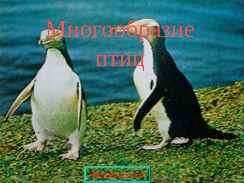 Многообразие птиц Prezentacii.com