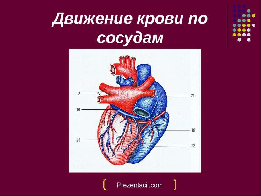 Движение крови по сосудам Prezentacii.com
