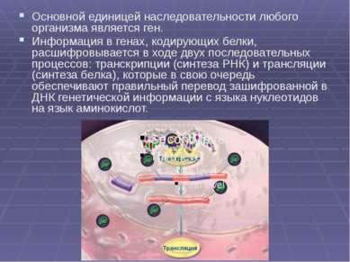 Основной единицей наследовательности любого организма является ген. Информаци...