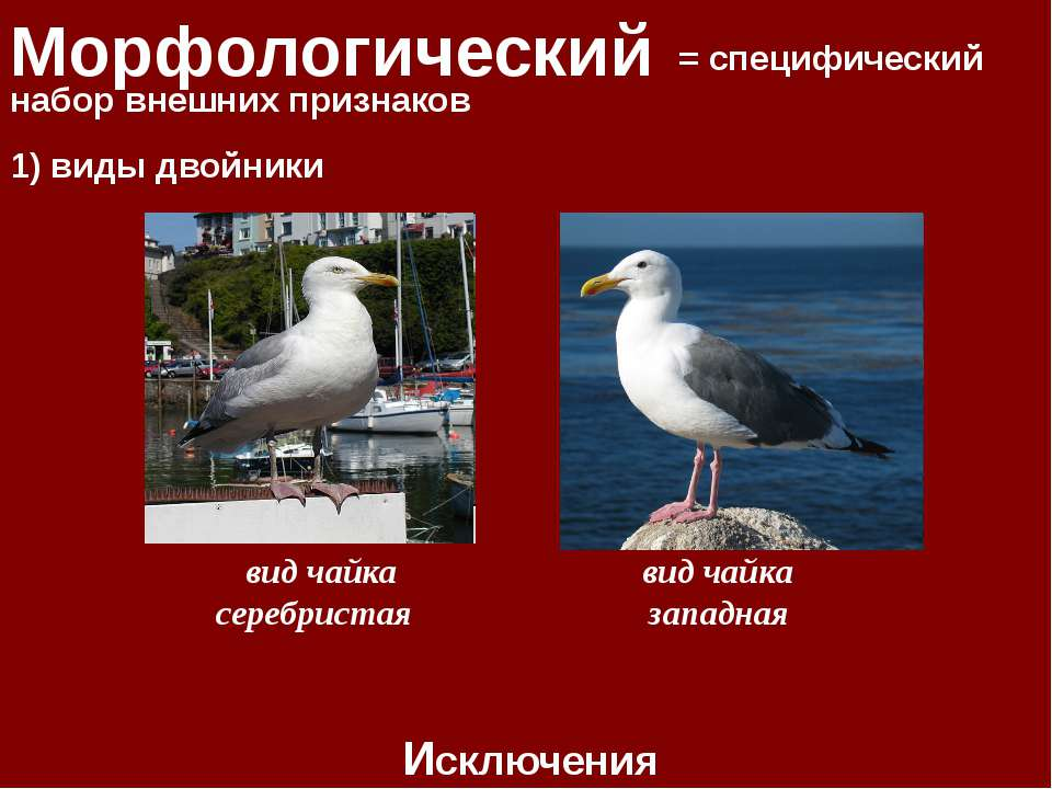 Морфологический = специфический набор внешних признаков Исключения 1) виды дв...