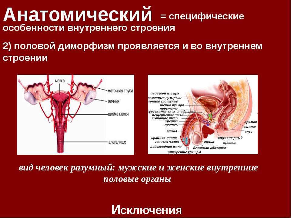 Анатомический = специфические особенности внутреннего строения Исключения 2) ...