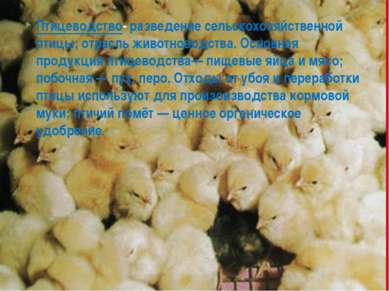 Птицеводство-разведение сельскохозяйственной птицы; отрасль животноводства. ...