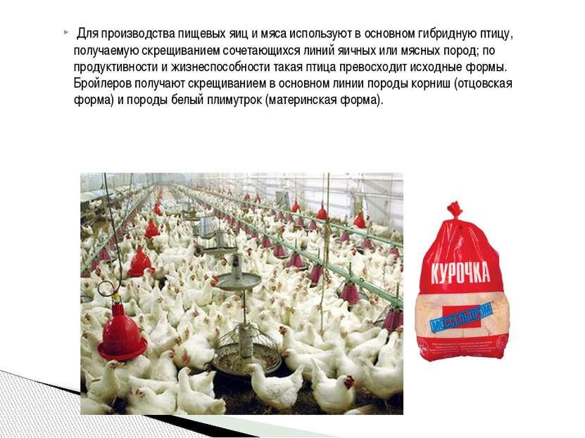 Для производства пищевых яиц и мяса используют в основном гибридную птицу, п...
