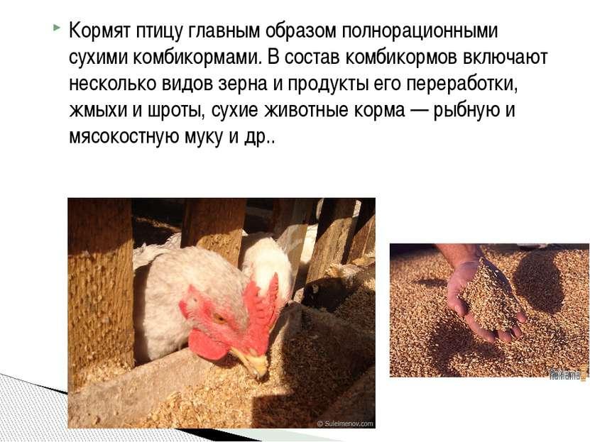 Кормят птицу главным образом полнорационными сухимикомбикормами.В состав ко...