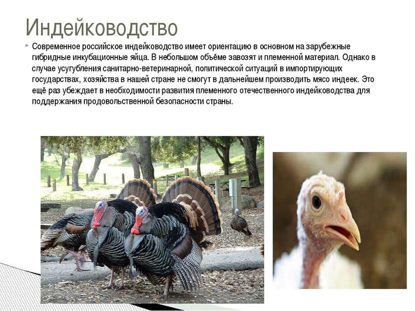 Современное российское индейководство имеет ориентацию в основном на зарубежн...