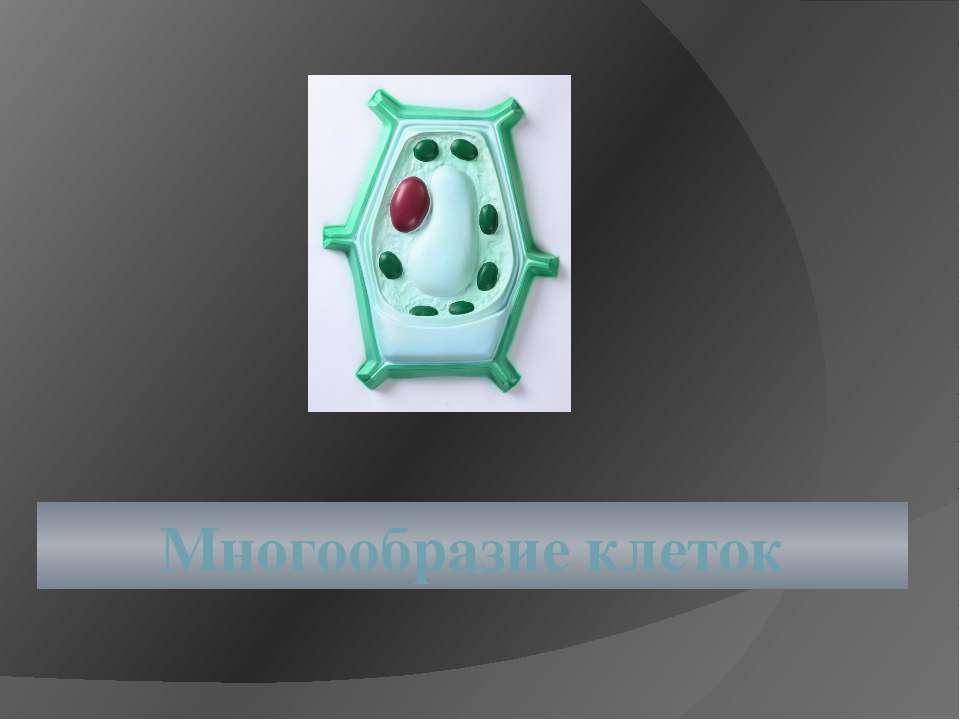 Многообразие клеток