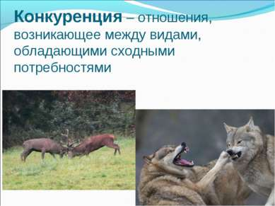 Конкуренция – отношения, возникающее между видами, обладающими сходными потре...