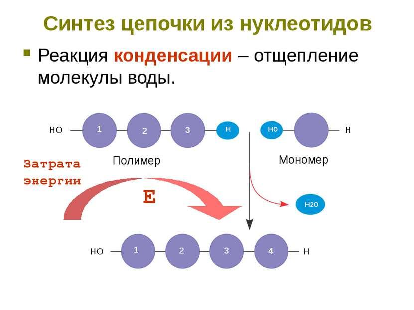 Синтез цепочки из нуклеотидов Реакция конденсации – отщепление молекулы воды....