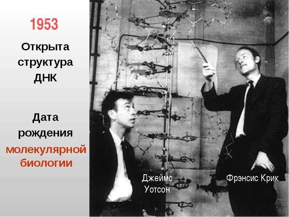 1953 Фрэнсис Крик Джеймс Уотсон Открыта структура ДНК Дата рождения молекуляр...
