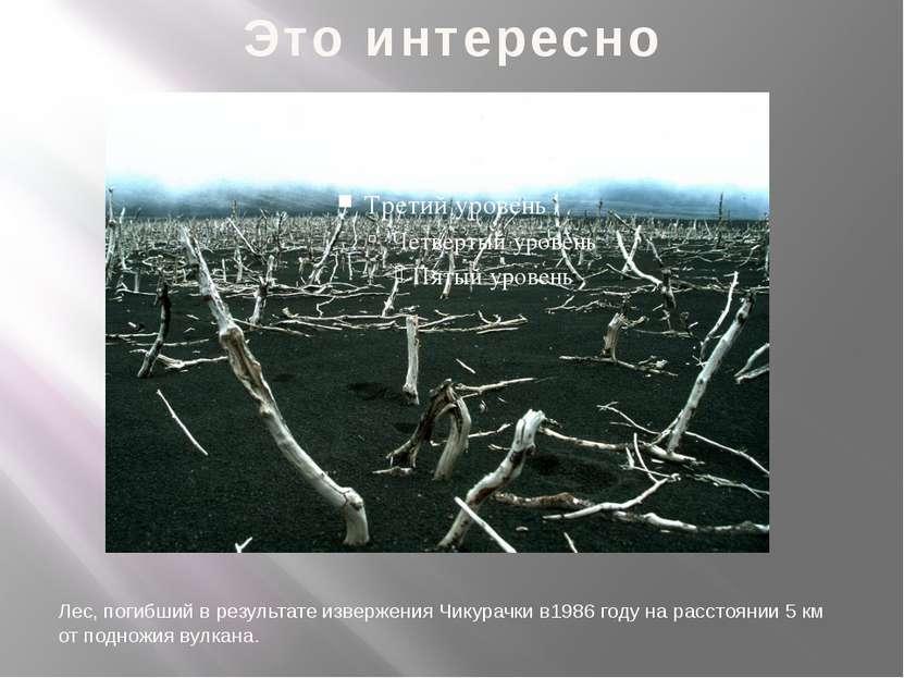 Это интересно Лес, погибший в результате извержения Чикурачки в1986 году на р...