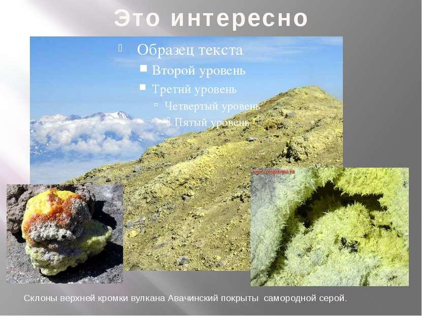 Это интересно Склоны верхней кромки вулкана Авачинский покрыты самородной серой.
