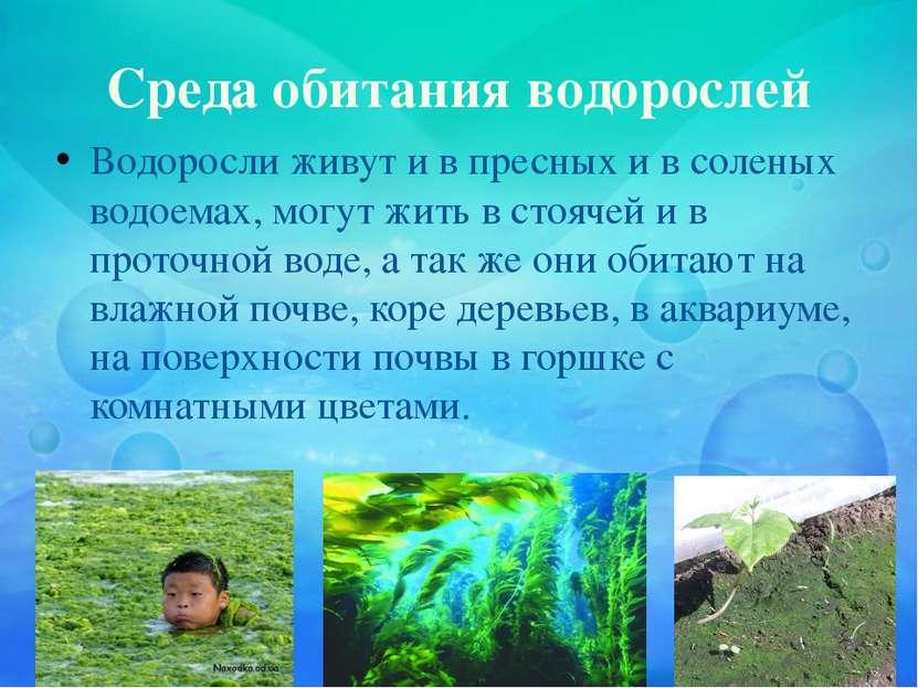 Среда обитания водорослей Водоросли живут и в пресных и в соленых водоемах, м...