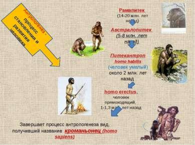 Антропогенез - процесс становления и развития человека Рамапитек (14-20 млн. ...