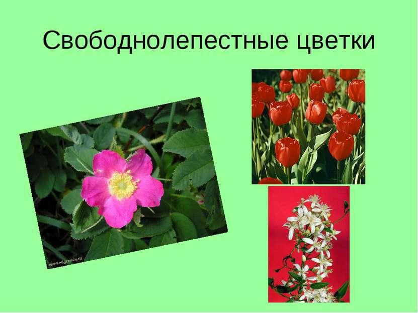Свободнолепестные цветки