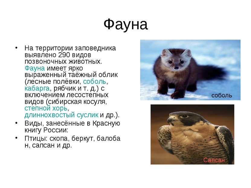 Фауна На территории заповедника выявлено 290 видов позвоночных животных.Фаун...
