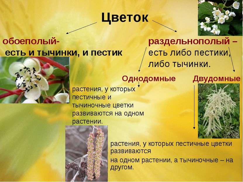 Цветок обоеполый- есть и тычинки, и пестик раздельнополый – есть либо пестики...