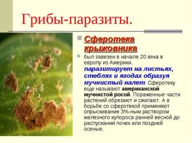 Грибы-паразиты. Сферотека крыжовника был завезен в начале 20 века в европу из...