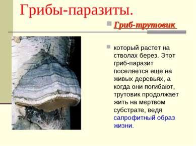 Грибы-паразиты. Гриб-трутовик который растет на стволах берез. Этот гриб-пара...