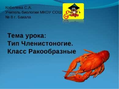 Кобелева С.А. Учитель биологии МКОУ СОШ № 8 г. Бакала Тема урока: Тип Членист...