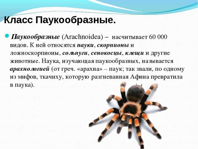 Класс Паукообразные. Паукообразные (Arachnoidea) – насчитывает 60000 видов. ...