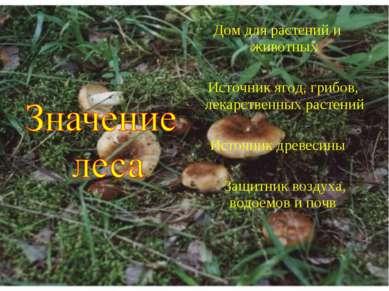 Дом для растений и животных Источник ягод, грибов, лекарственных растений Ист...