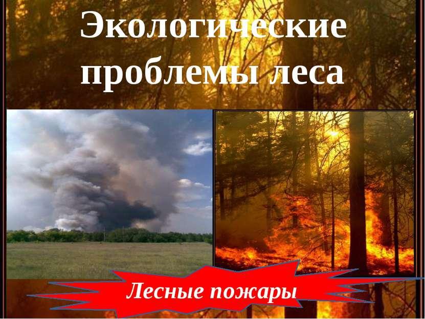 Экологические проблемы леса Лесные пожары