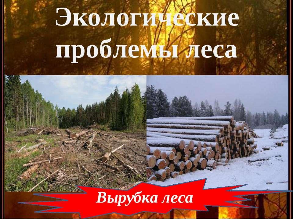 Экологические проблемы леса Вырубка леса