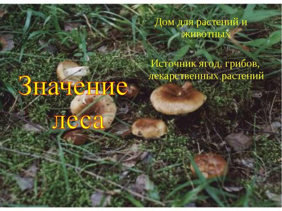 Дом для растений и животных Источник ягод, грибов, лекарственных растений
