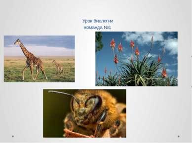 Урок биологии команда №1