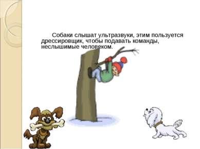 Собаки слышат ультразвуки, этим пользуется дрессировщик, чтобы подавать коман...