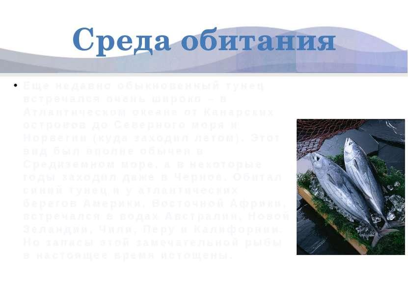 Среда обитания Еще недавно обыкновенный тунец встречался очень широко – в Атл...