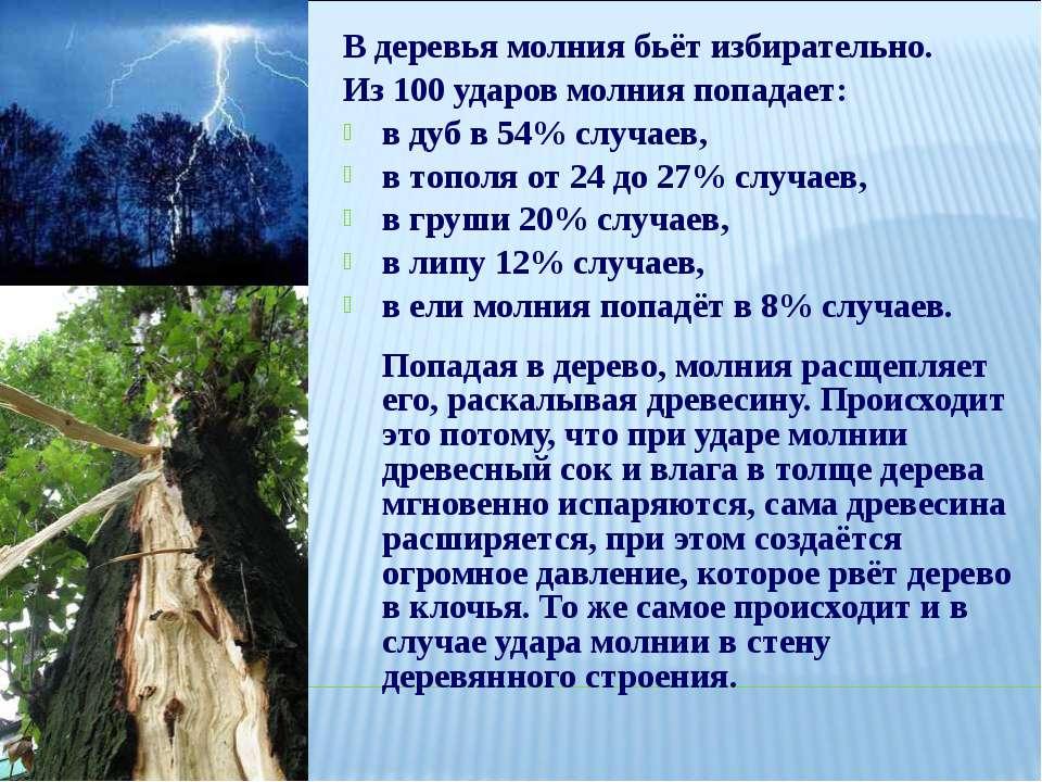 В деревья молния бьёт избирательно. Из100 ударов молния попадает: вдуб в54...