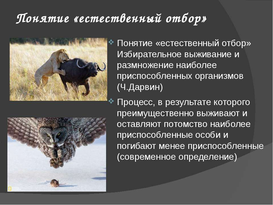 Понятие «естественный отбор» Понятие «естественный отбор» Избирательное выжив...
