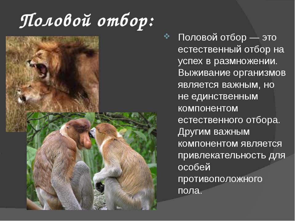 Половой отбор: Половой отбор — это естественный отбор на успех в размножении....