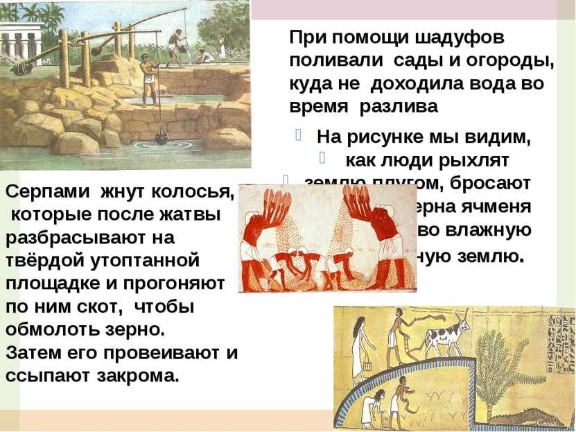 На рисунке мы видим, как люди рыхлят землю плугом, бросают в землю зерна ячме...