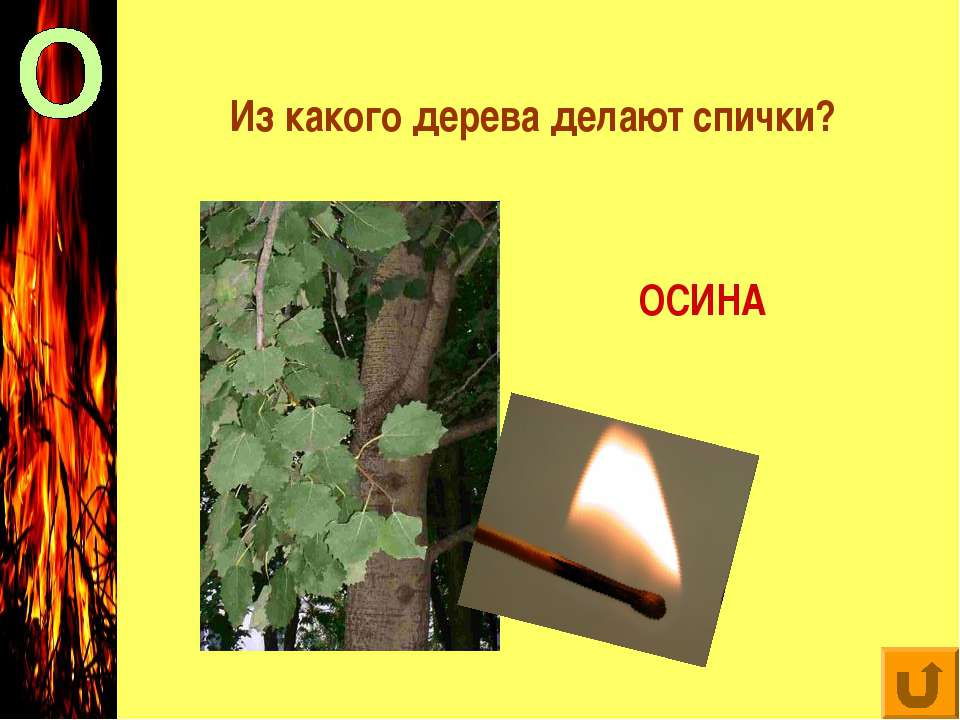 Из какого дерева делают спички? ОСИНА