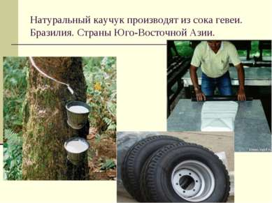 Натуральный каучук производят из сока гевеи. Бразилия. Страны Юго-Восточной А...