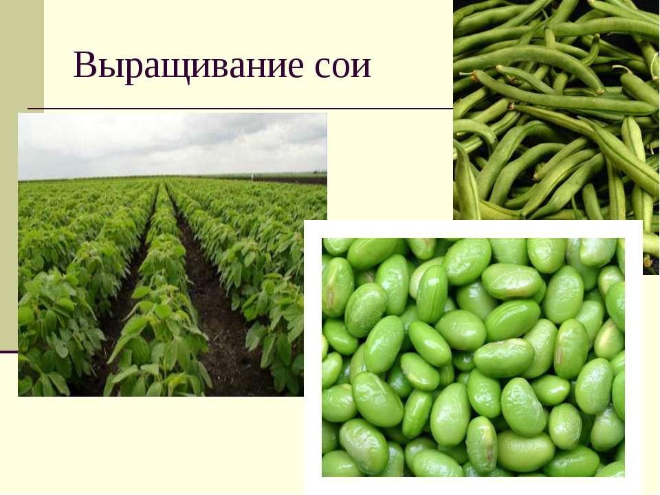 Выращивание сои урожайность 32
