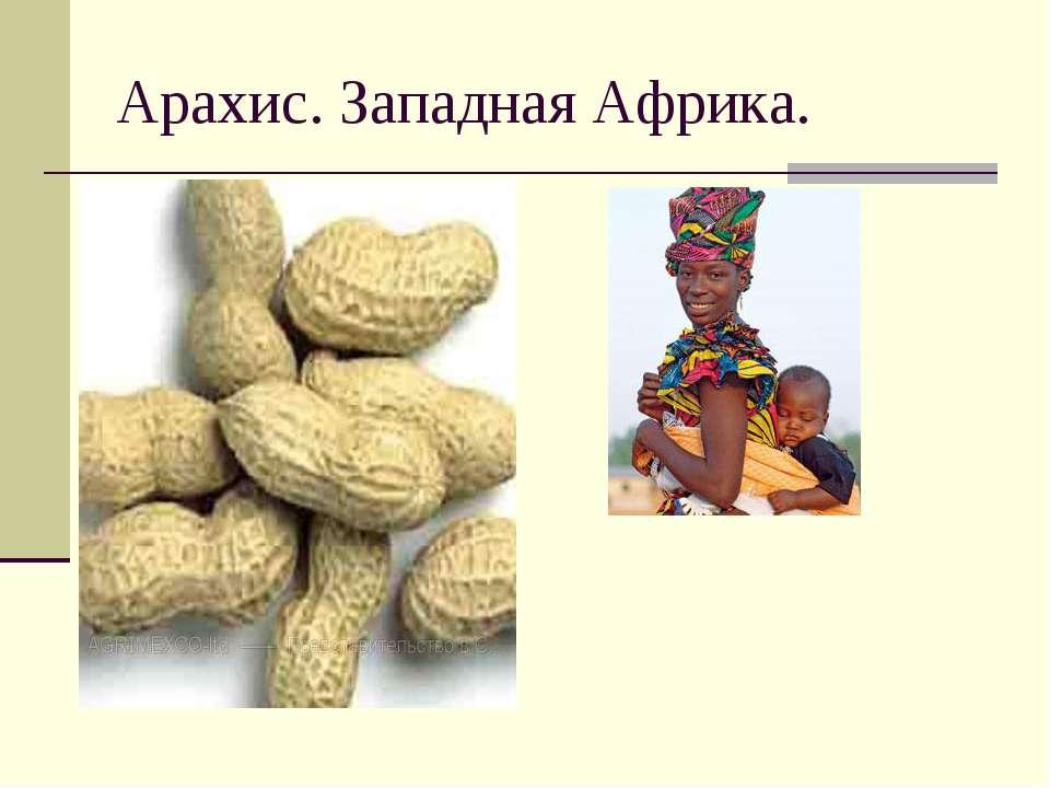 Арахис. Западная Африка.
