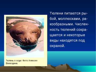 Тюлени питаются ры- бой, моллюсками, ра- кообразными. Числен- ность тюлений с...
