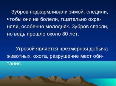 Зубров подкармливали зимой, следили, чтобы они не болели, тщательно охра- нял...