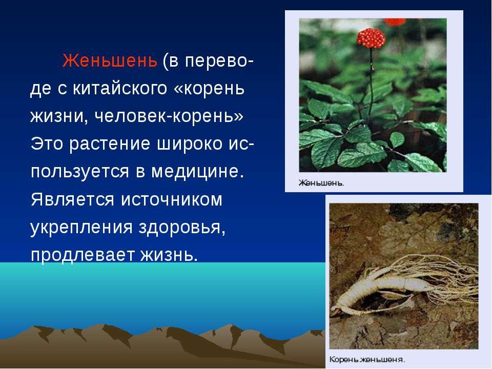Женьшень (в перево- де с китайского «корень жизни, человек-корень» Это растен...