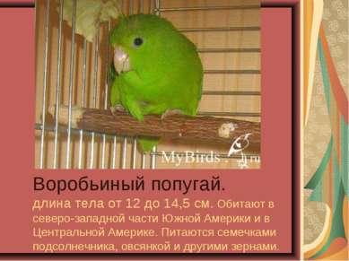 Воробьиный попугай. длина тела от 12 до 14,5 см. Обитают в северо-западной ча...