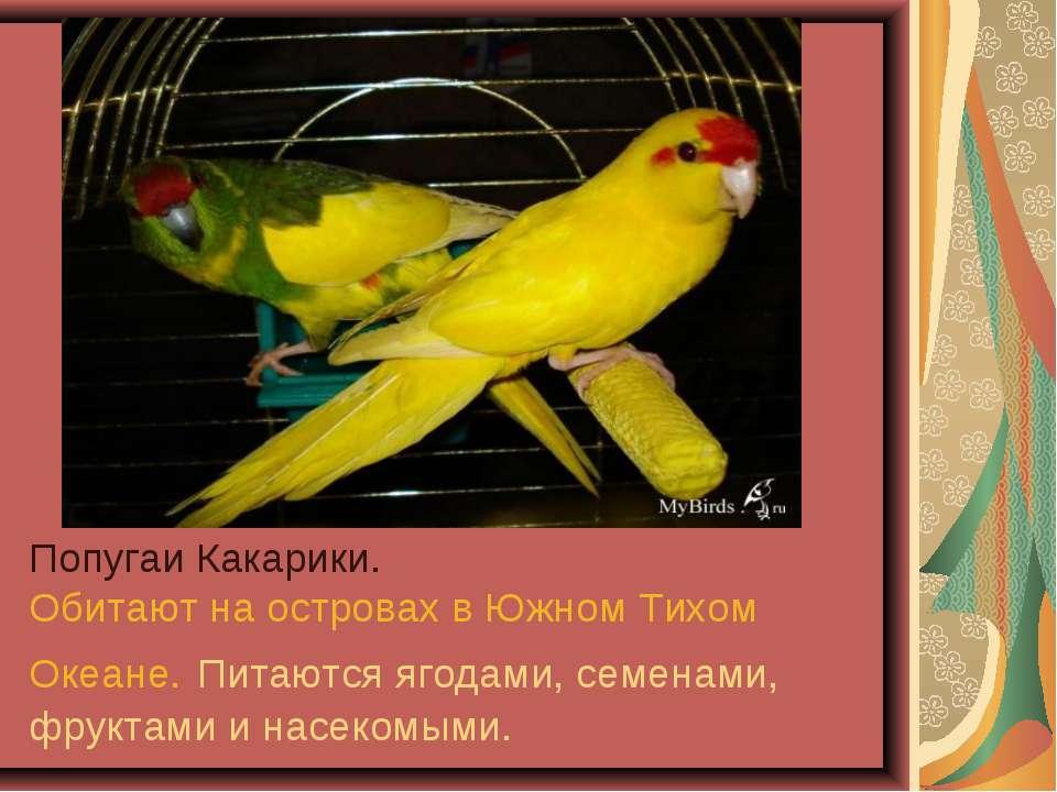 Попугаи Какарики. Обитают на островах в Южном Тихом Океане. Питаются ягодами,...
