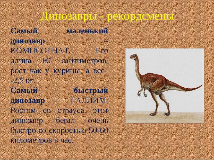 Самый маленький динозавр – КОМПСОГНАТ. Его длина 60 сантиметров, рост как у к...