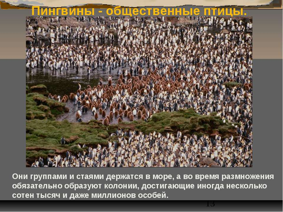 Пингвины - общественные птицы. Они группами и стаями держатся в море, а во вр...