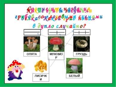 Какие грибы засушила белка? Какой гриб попал в дупло случайно? ОПЯТА МУХОМОР ...