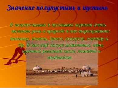 Значение полупустынь и пустынь В полупустынях и пустынях играют очень важною ...